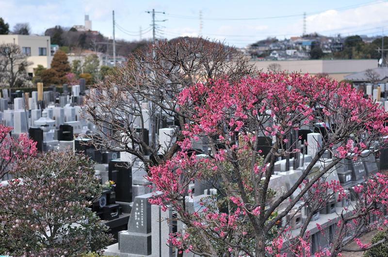 町田の霊園05