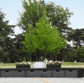 樹木葬のイメージ