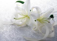 藤沢市でも増えてきた家族葬という葬儀のかたち