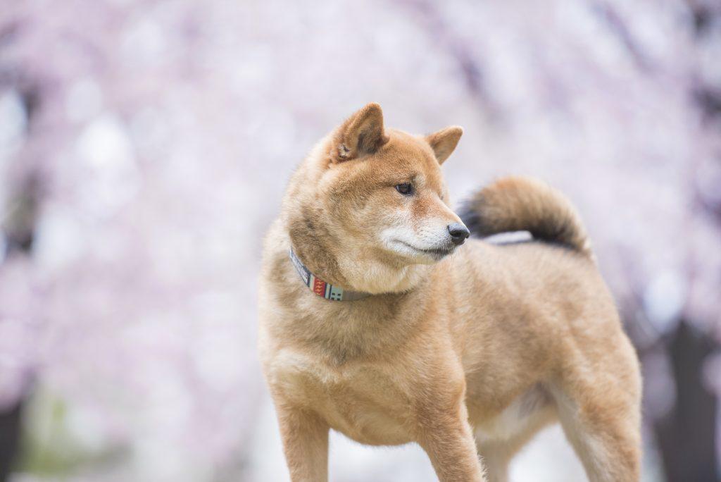 千葉県でペット火葬をする際の注意点と斎場の選び方