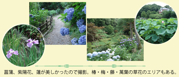 町田薬師池公園の花々