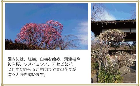 町田小野路霊園は花盛り