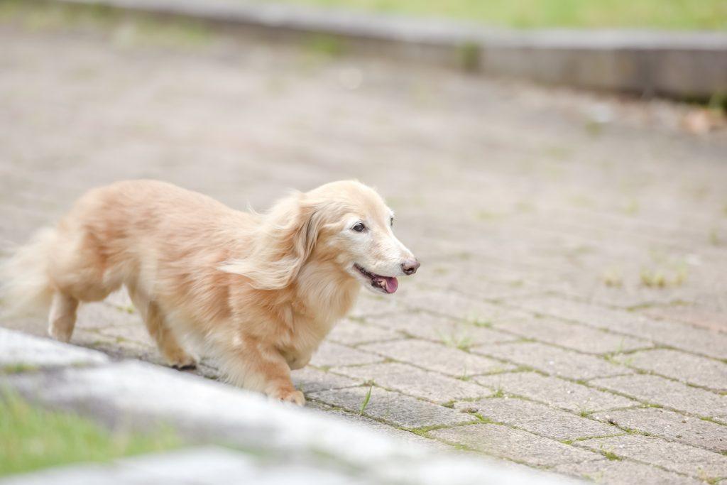 家族と変わらないペットの供養方法