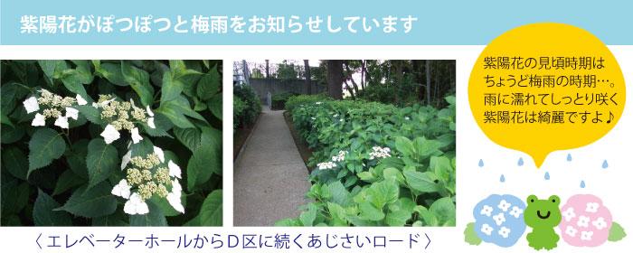 mochinoki_shin