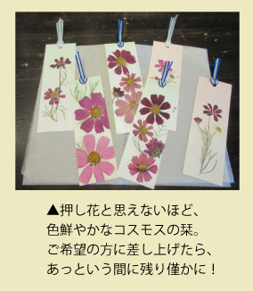 菊名墓地のお客様から頂いた手作り栞