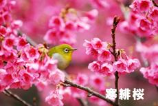 町田小野路霊園の桜をご紹介