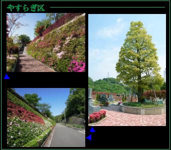 町田小野路霊園「やすらぎ区」のツツジ