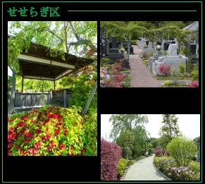 町田小野路霊園「せせらぎ区」のツツジ